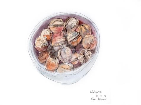 Ewa Henner_Walnuts_Pen ink Watercolour